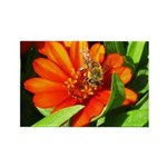 Bee on Orange Daisy Magnets