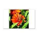 Bee on Orange Daisy Car Magnet 20 x 12