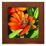 Bee on Orange Daisy Framed Tile