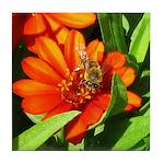 Bee on Orange Daisy Tile Coaster