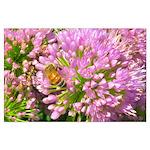 Bee on summer Milkweed Posters