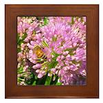 Bee on summer Milkweed Framed Tile