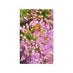 Bee on summer Milkweed Area Rug