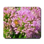 Bee on summer Milkweed Mousepad