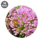 Bee on summer Milkweed 3.5