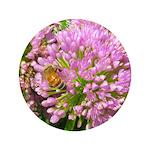 Bee on summer Milkweed Button