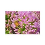 Bee on summer Milkweed Magnets