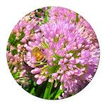 Bee on summer Milkweed Round Car Magnet
