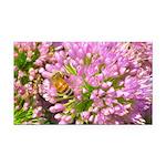 Bee on summer Milkweed Rectangle Car Magnet