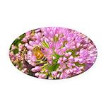 Bee on summer Milkweed Oval Car Magnet