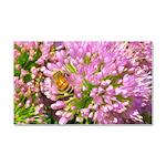 Bee on summer Milkweed Car Magnet 20 x 12