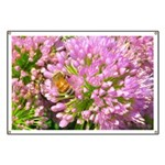 Bee on summer Milkweed Banner