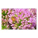 Bee on summer Milkweed Sticker