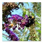 Bee on summer Milkweed Square Car Magnet 3