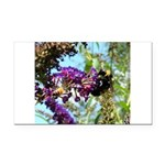 Bee on summer Milkweed Rectangle Car Magnet