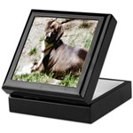 Family Pet Keepsake Box