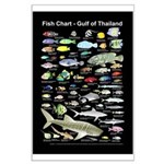 Fish Identification Chart 23x35in Large Poster