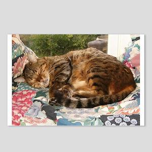 Benny sleeping Postcards (Package of 8)