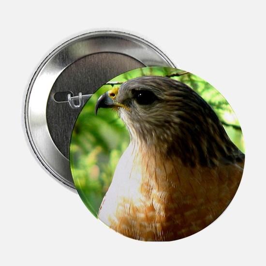 """Cute Bird of prey 2.25"""" Button"""