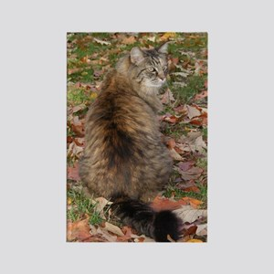 Maine Coon cat Fall leaves Rectangle Magnet