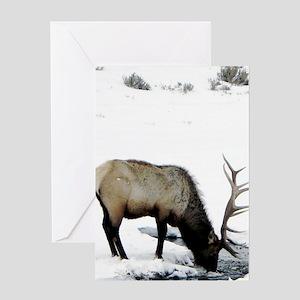 Elk in Yellowstone Greeting Card