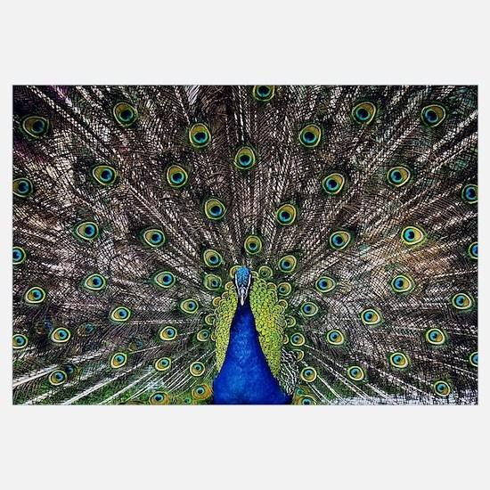 Cute Male peacock Wall Art
