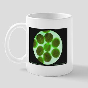 Photinus pyralis eggs Mug
