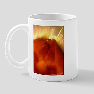 Fireant stinger at 80x Mug