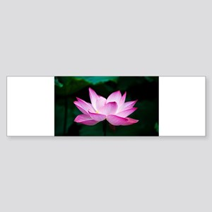 Indian Lotus Flower Bumper Sticker