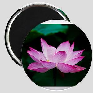 Indian Lotus Flower Magnets