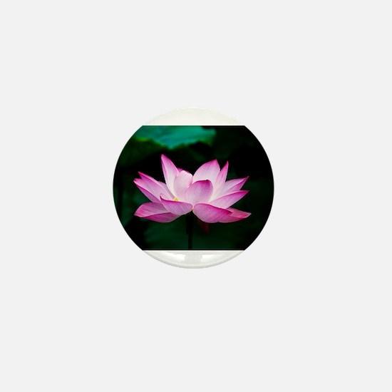 Indian Lotus Flower Mini Button