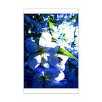 Apple Blossom Blues Mini Poster Print