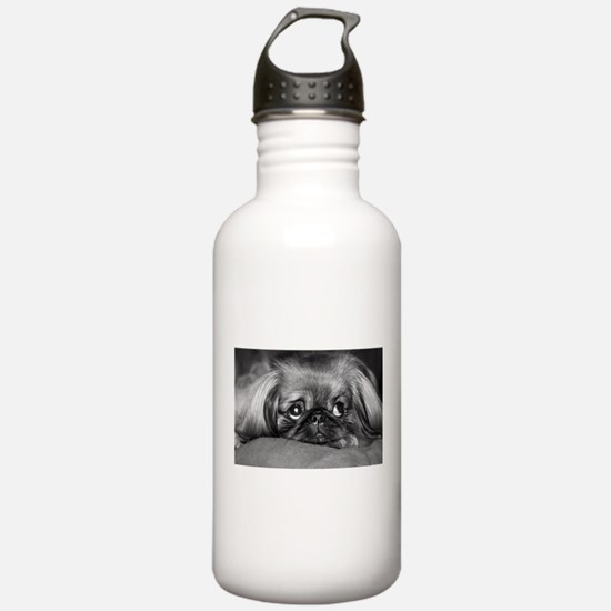 Boo, Bo, and Taz 0201.jpg Water Bottle