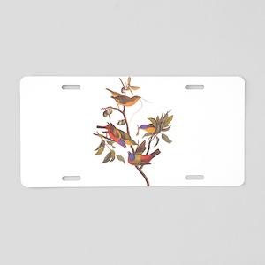 Painted Bunting Birds in Wild Olive Tree Aluminum