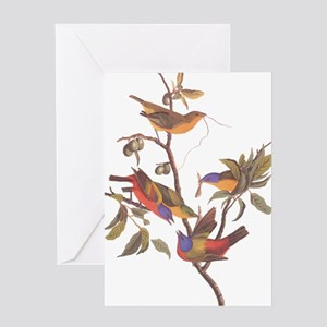 Painted Bunting Birds in Wild Olive Tree Greeting