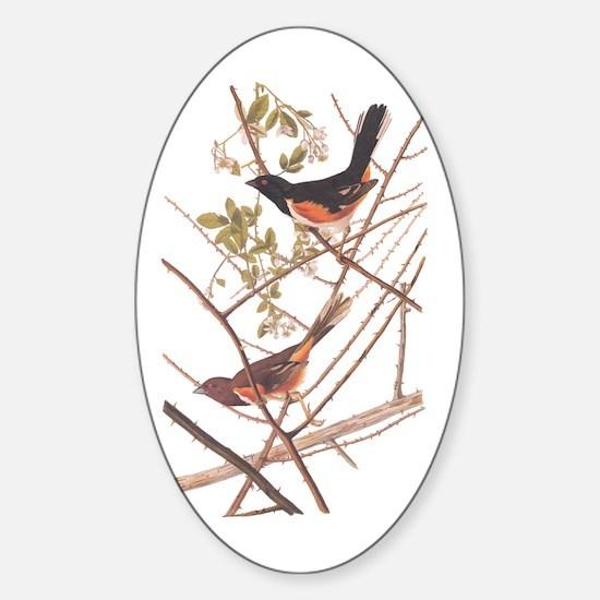 Towee Bunting Birds Audubon Vintage Art Decal