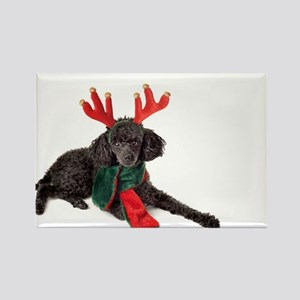 Black Christmas Poodle with Antlers and Re Magnets