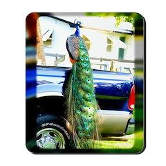 Peacock on a Pickup Mousepad