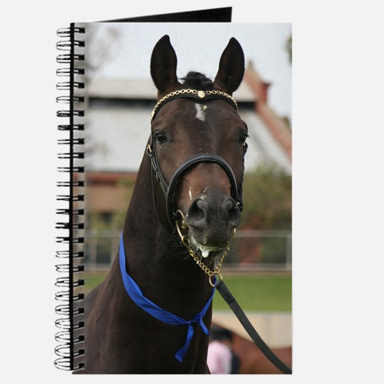 Cute Anglo arabian Journal