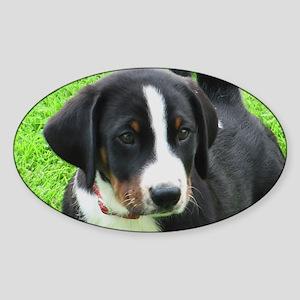 Appenzeller Sennenhund puppy Sticker