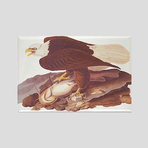 Bald Eagle Vintage Audubon Art Magnets