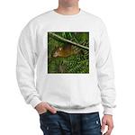 hyrax Sweatshirt