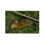 hyrax Rectangle Magnet (100 pack)