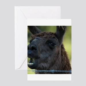 Talking Llama Greeting Cards