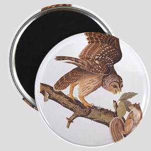 Owl and Squirrel Vintage Audubon Art Magnets