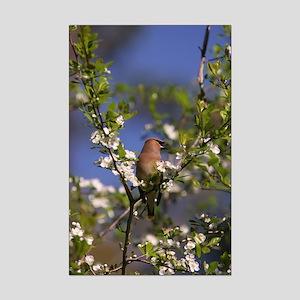 Cedar Waxwing 001 12 x 18 Mini Poster Print
