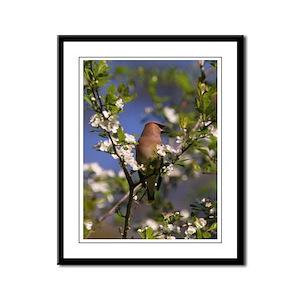 Cedar Waxwing 001 13 x16 Framed Panel Print