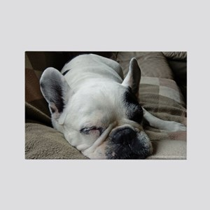 Pied French Bulldog Magnets