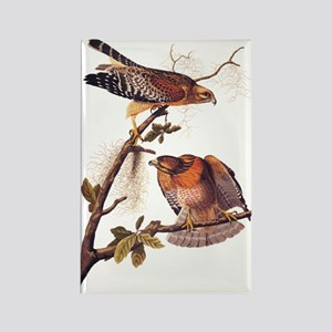 Red Shouldered Hawk Vintage Audubon Art Magnets