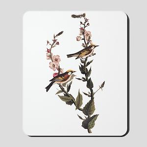Chestnut Sided Warbler Vintage Audubon Art Mousepa